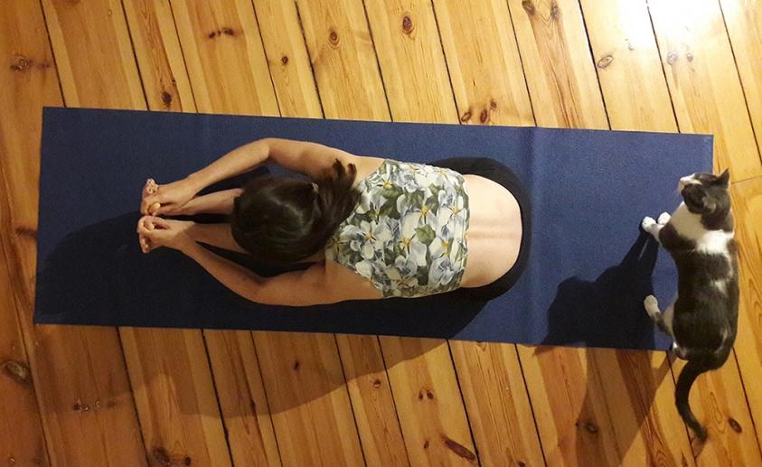 http://yoga.katharina.in/files/gimgs/th-1_paschimattanasana.jpg